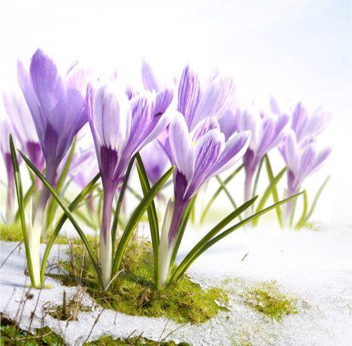 seizoensgroenten maart